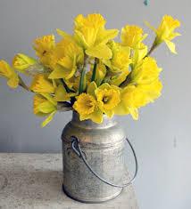 daffodild